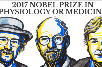 Nobel Prize 2017: the powerful effect of light on circadian rhythm
