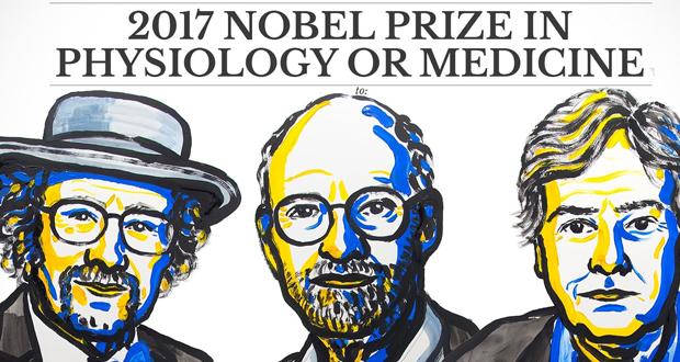 Prix Nobel 2017 : l'importance de la lumière sur les rythmes circadiens